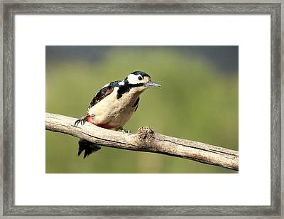 Woodpecker Picture Framed Print by Heike Hultsch