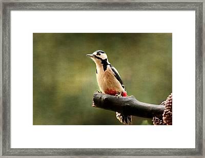 Woodpecker Texturepicture Framed Print by Heike Hultsch