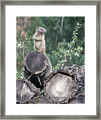 Woodpile Squirrel Framed Print