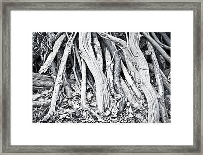 Woodpile Framed Print