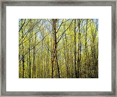 Woods 2 Framed Print by Roberto Alamino
