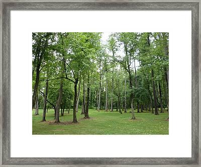 Woods At Lake Redman Framed Print by Donald C Morgan