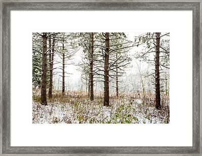 Woods In Winter 2 At Retzer Nature Center  Framed Print by Jennifer Rondinelli Reilly - Fine Art Photography