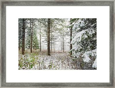Woods In Winter At Retzer Nature Center  Framed Print by Jennifer Rondinelli Reilly - Fine Art Photography