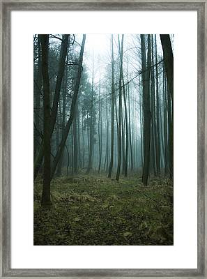 Woods Framed Print by Art of Invi
