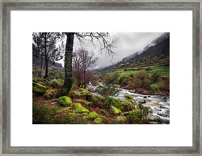 Woods Landscape Framed Print by Carlos Caetano