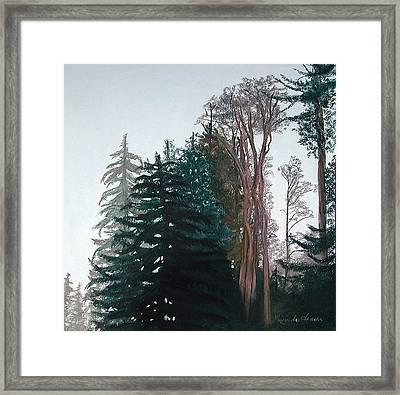 Woods Mist Framed Print by Lucinda  Hansen