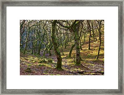 Woods Near Badgeworthy Water Exmoor Framed Print