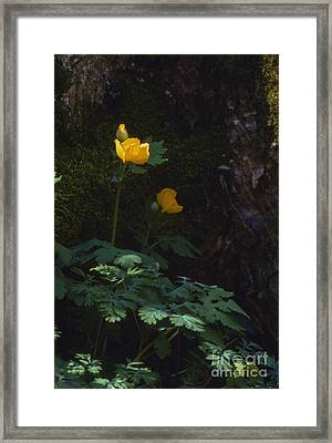 Woods Poppy Framed Print by Lowell Anderson