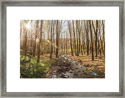 Woods Wondering Framed Print by Kristopher Schoenleber