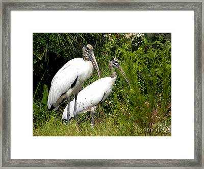 Framed Print featuring the photograph Woodstork Couple by Terri Mills