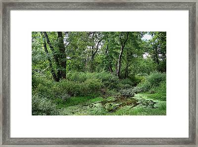 Woodsy Framed Print by Mikki Cucuzzo