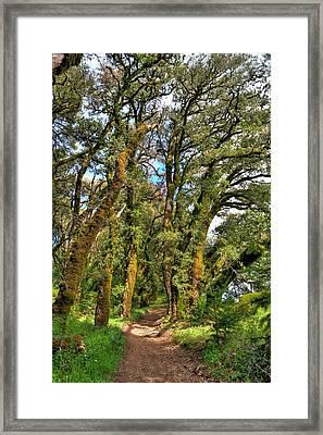 Woodsy Trail Framed Print by Paul Owen