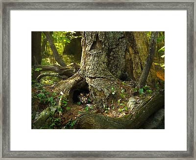 Woody 120 In The Wild Framed Print by Rick Mosher