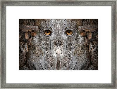 Woody 127 Framed Print by Rick Mosher
