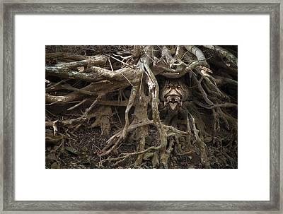 Woody 128 In The Wild Framed Print by Rick Mosher