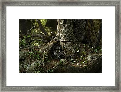 Woody 142 In The Wild Framed Print by Rick Mosher