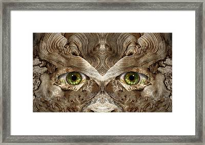 Woody 148 Framed Print by Rick Mosher