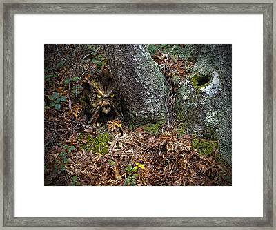 Woody 93 In The Wild Framed Print by Rick Mosher