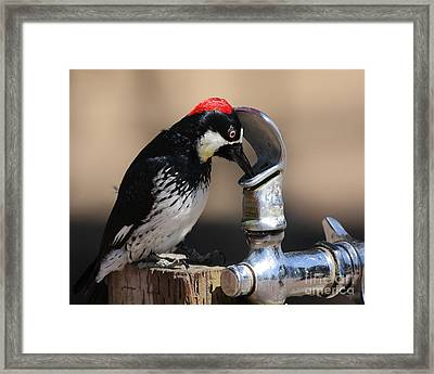 Woody And The Water Fountain Framed Print by Wingsdomain Art and Photography