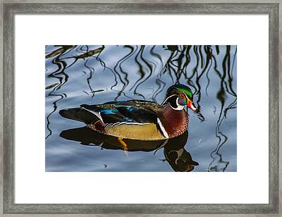 Woody Framed Print