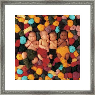 Wool Babies Framed Print