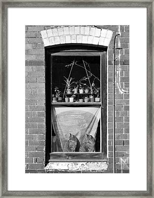 Woolloomolloo Window With Cats Framed Print by Barry Culling