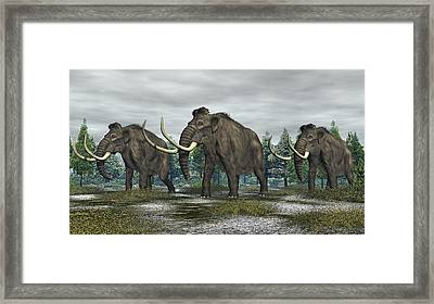 Woolly Mammoth Framed Print by Walter Colvin