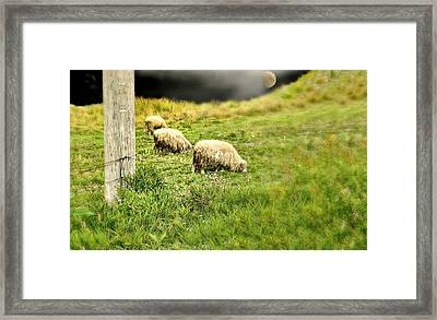 Wooly Framed Print by Diana Angstadt