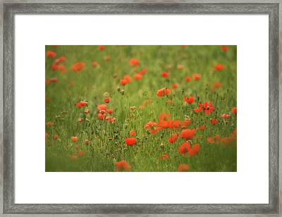 Worcestershire Poppy Field Framed Print by Wayne Molyneux