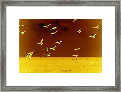 Words Have No Wings Framed Print by Susanne Van Hulst