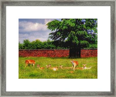 Framed Print featuring the photograph Work Day Out by Isabella F Abbie Shores FRSA