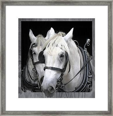 Work Horses - Equine Portrait Framed Print by Rayanda Arts