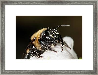 Worker Bee And Pollen Detail Framed Print