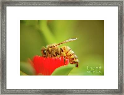 Framed Print featuring the photograph Worker Bee by Micah May