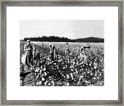 Workers Picking Cotton, Georgia, 1936 Framed Print