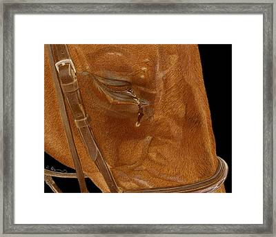 Workhorse Blues - Horse Painting Framed Print