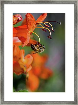Working Bee Framed Print by Stelios Kleanthous