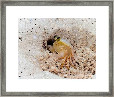 Working Crab Framed Print