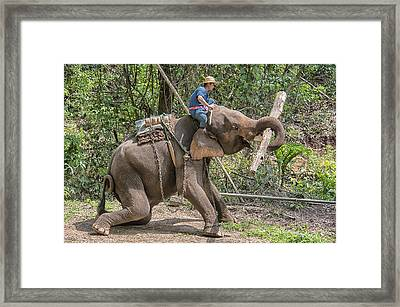 Framed Print featuring the photograph Working Elephant by Wade Aiken