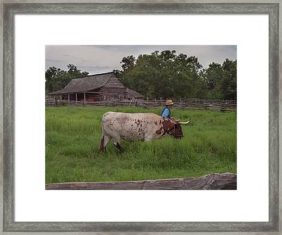 Working Farm Oxen Framed Print by Joshua House