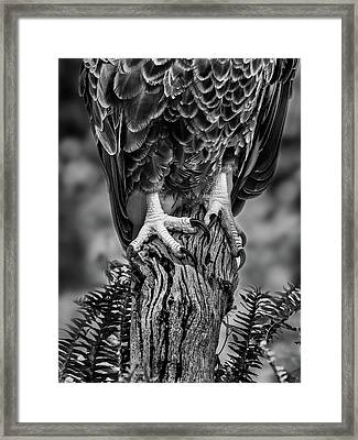 Framed Print featuring the photograph Working Feet by Steve Zimic