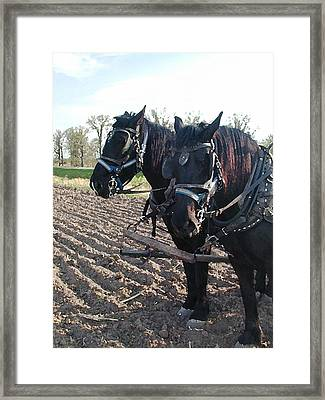 Working Percherons Framed Print by Laurie With