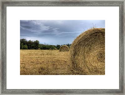 Framed Print featuring the photograph Working The Field by Gary Smith