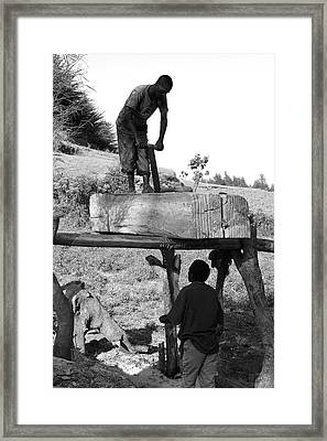 Working The Wood Framed Print by Aidan Moran