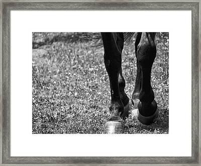 Working Trot Framed Print by JAMART Photography