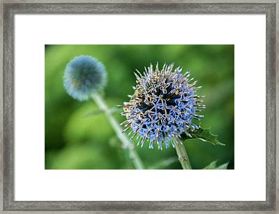 Framed Print featuring the photograph World Of Chaos by Bill Pevlor