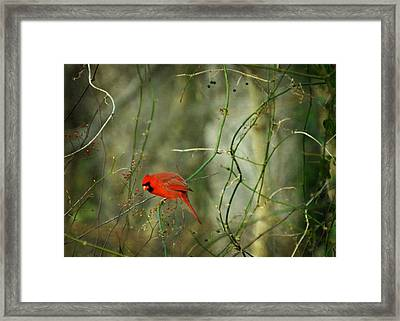 World Of Fire And Dew Framed Print
