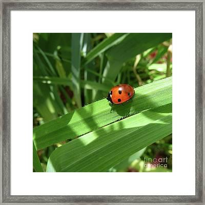 World Of Ladybug 1 Framed Print by Jean Bernard Roussilhe