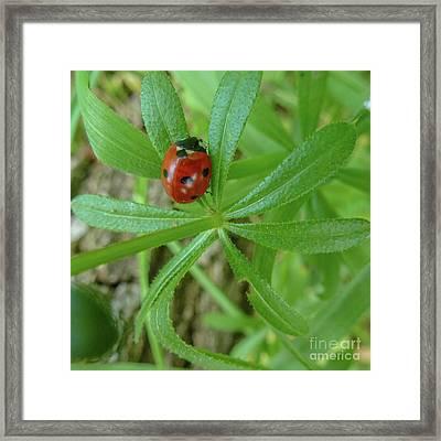 World Of Ladybug 3 Framed Print by Jean Bernard Roussilhe